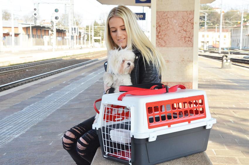tariffa speciale per i cani